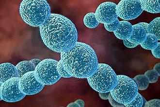 Длительность лечения хронического тонзиллита