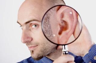 Строение ухо