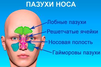 Строение пазух носа