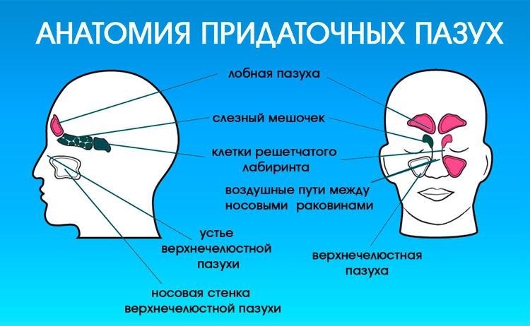 Затемнение придаточных пазух носа